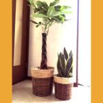 観葉植物 緑は気持ちを穏やかにしリラックスさせてくれる