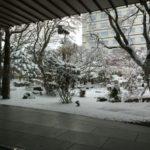 雪国に行っていました【今日から通常通りご相談受付しています】